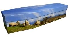 3893 - Sheep