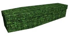 3933 - Box hedge