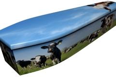 4076 - Cows